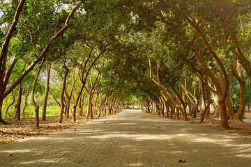 Beautiful scenic walkway of Yizai park around with a trees in Tainan city, Taiwan.