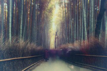 Foto op Aluminium Grandfailure Path through bamboo trees, Japan