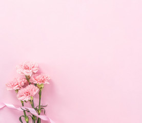 Beautiful fresh blooming baby pink color tender carnations isolated on bright pink background, mothers day thanks design concept,top view,flat lay,copy space,close up,mock up