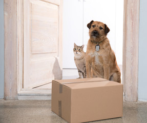 receiving parcel dog and cat