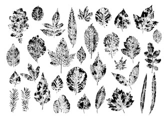 Set of forest leaf stamps. Black prints isolated on white background. Silhouettes of leaves of oak, maple, fir, birch, poplar, willow and others.