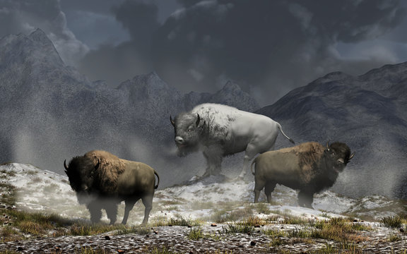 The white bison king and his two buffalo guards stand on snowy ground in a valley surrounded by snow capped rocky mountains in the American wild west on a dark and stormy day. 3D Rendering