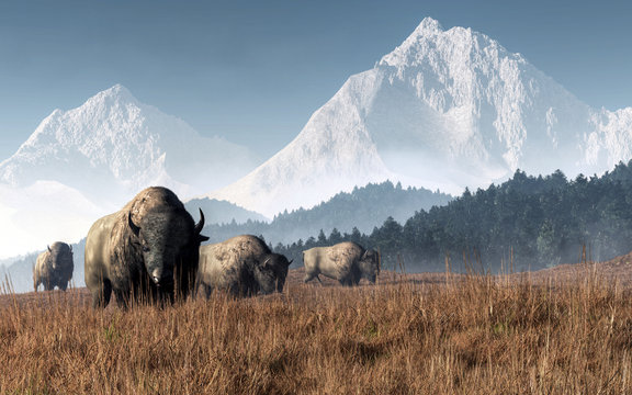 A herd of bison grazes in a valley in the late summer in the American west. Snow capped rocky mountains and fir trees line the valley where these great animals roam. 3D Rendering
