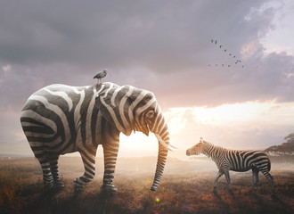 Photo sur Plexiglas Zebra Elephant with zebra stripes