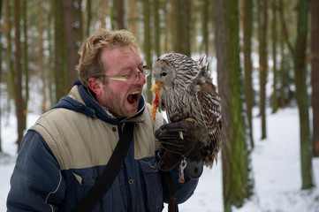 Fototapete - Hungry falconer with tawny owl on his glove, eating chicken reward