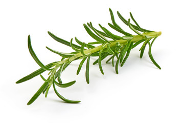 Twig of rosemary, close-up