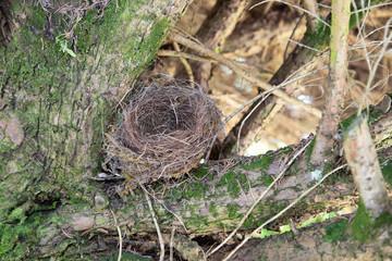 Empty nest on the branch tree on garden park