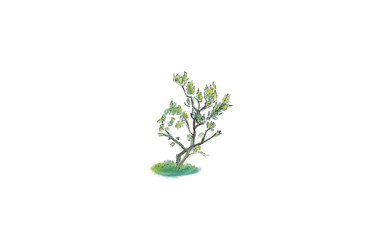 Art color drawing little tree illustration.Tree with isolated white background.Herbal painting with grass