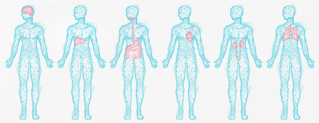 Polygonal human profiles vector, set of isolated bodies with colored body parts. Liver and kidney, lungs and brain, digestive system, silhouettes in blue