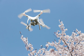 ドローン 桜の花