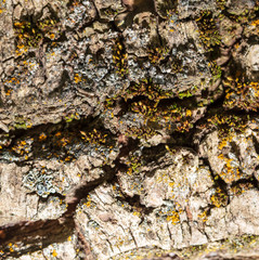 Tree bark as abstract background
