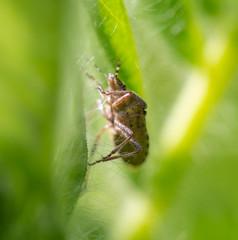 bedbug in nature in spring