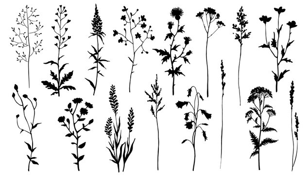 Set of black silhouettes of meadow herbs. Wildflowers. Wild grass. Vector illustration.