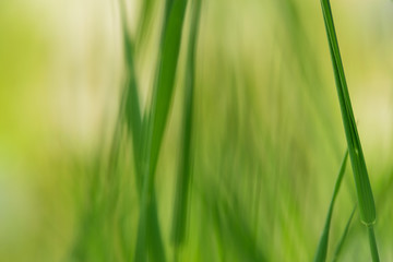 Close up of grass leaves nature background