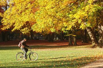 Rider in bike crosses the Englischer Garten in Munich in a beautiful autumnal day