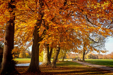 Beautiful view of the Englischer Garten in Munich in a beautiful autumnal day with a red leaves carpet and orange, gold and red foliage on the trees