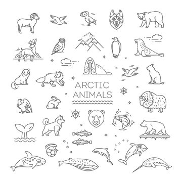 Line arctic wildlife concept with different north animals . Vector