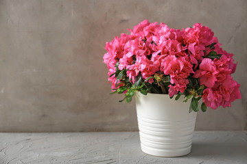 Pot with beautiful blooming azalea on table