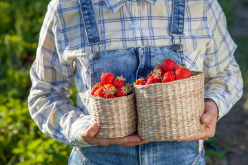 Girl in denim clothes with strawberry baskets in a sunny summer garden