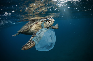 Fotorolgordijn Schildpad Underwater global problem with plastic rubbish