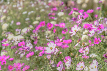 Picture of purple and white flowers in beautiful meadow or garden