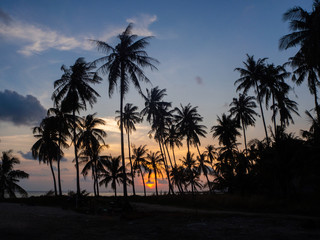Silhouette of palm trees at sunset and multicolored clouds. Koh Phangan Thailand