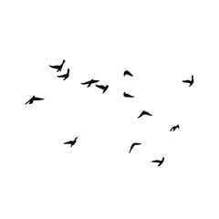 Foto op Aluminium Vogel Birds