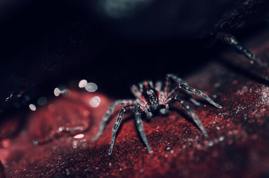 Spider on red rock