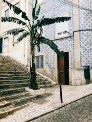 Banana Tree Growing in Lisbon City