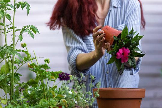 Anonymous woman repotting a plant into a terracotta pot