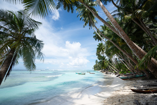 Beach with palm trees on island in West Sumatra