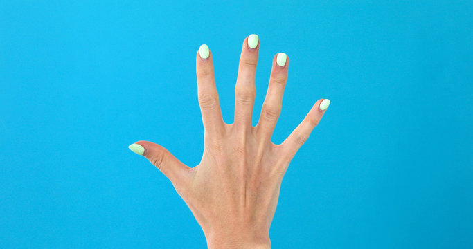 Closeup of isolated on blue adult female hand counting from 0 to 5. Woman shows fist fist, then one, two, three, four, five fingers. Manicured nails painted with beautiful polish. Math concept.