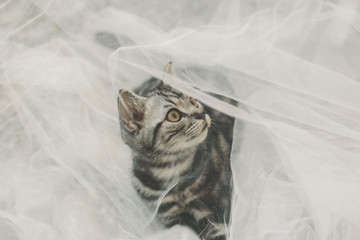 Close up view of cat playing with white tulle