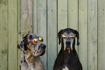 Cool dogs in sunglasses