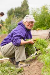 Happy, smiling, healthy, active, senior woman volunteer working in community garden. Active mature lifestyles.
