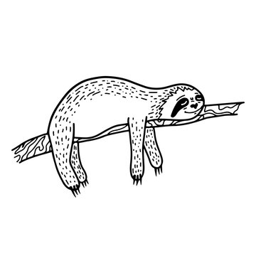 Lazy hand drawn sloth sleeping on a tree branch. Hand drawn, doodle style.