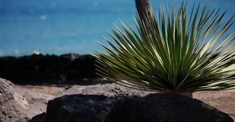 Fototapeta Costa Teguise Lanzarote Playa de Las Cucharas obraz