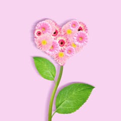 Shape of heart made of pink gerbera flowers on plant with green leaves.