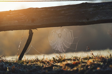 Spider's web at morning dew