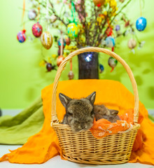 sweet small rabbit in the basket .eastern background