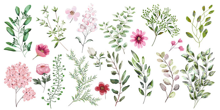 Watercolor illustration. Botanical collection. A set of wild and garden herbs, .decorative flowers. Leaves, flowers, branches and other natural elements. All figures are isolated on white background.