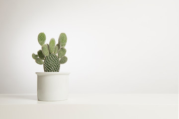 Photo sur Aluminium Cactus Cactus plant in a white flower pot in a white interior