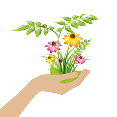 female hand hold plants and flowers isolated on white background vector illustration EPS10