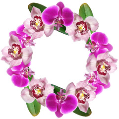 Fototapete - Beautiful floral circle of orchids. Isolated