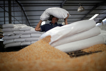 A man works on the only operative production line at a food packaging plant in Valencia