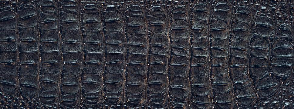 Crocodile back skin texture