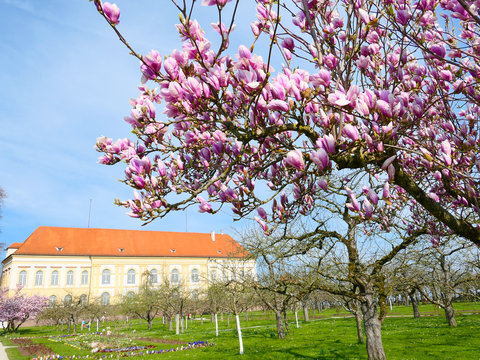 Dachau - Schlossgarten im Frühling