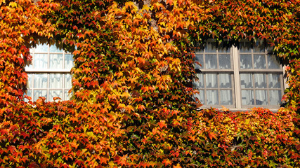 House window covered autumn leaves