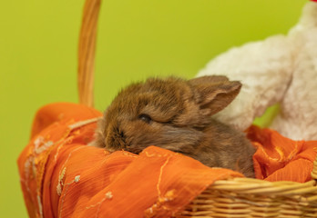 small rabbit in the basket