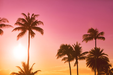 Palm tree silhouette on a background of tropical sunset Wall mural